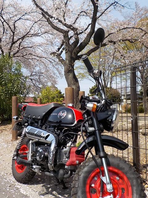満開の桜とモンキー